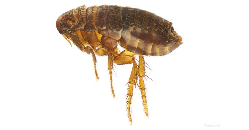 Vigyázat! A paraziták nem alszanak téli álmot!
